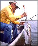 "Chesapeak Bay bluefish taken by the late ""Inky"" Moore of Pennsylvania.BluefishJoe Reynolds"