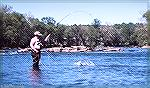 Check Edghill fishes for hickory shad in the Rappahannock River in Virginia. May 1988.