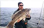 Tautog fishing has been good on the wreck and reef sites located off Ocean City since the season opened on January 1, 2015. More than a few out of state anglers have been coming to Ocean City in the c